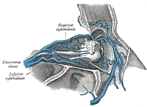 ophtlamic vein.png