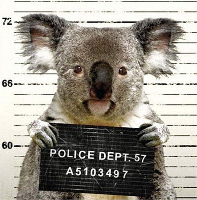 Koala-Fingerprints.jpg