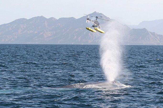 whale682_1136629a.jpg