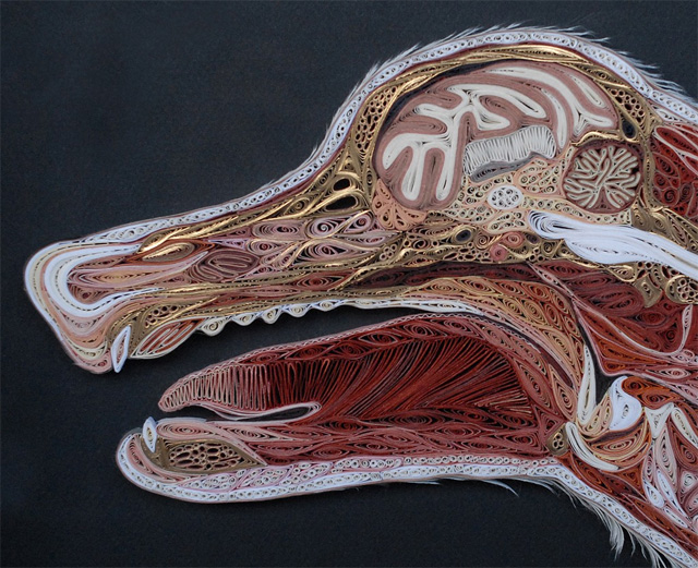 anatomy-ebfej.jpg