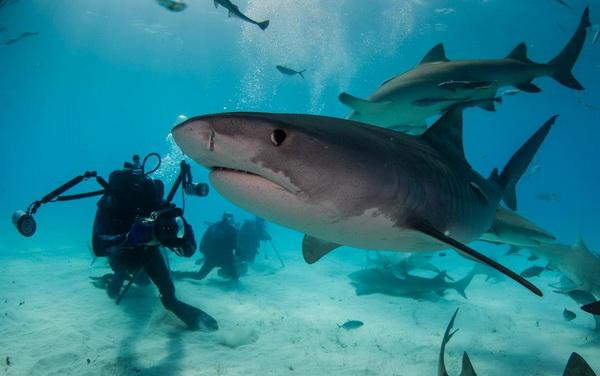 cápák a keresőmben1.jpg