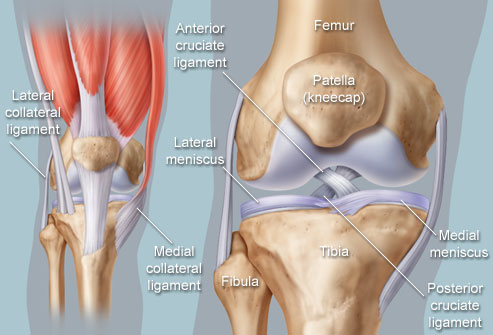knee-anatomy.jpg