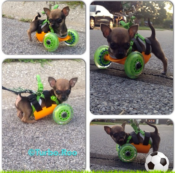 chihuahua-3d-printed-wheelchair-6.png