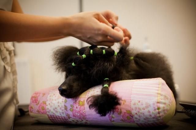 Kutyakozmetika3.jpg