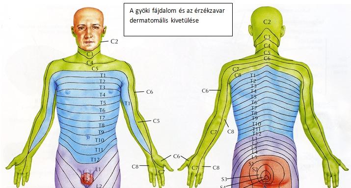 mely nyaki csigolyák felelősek a látásért