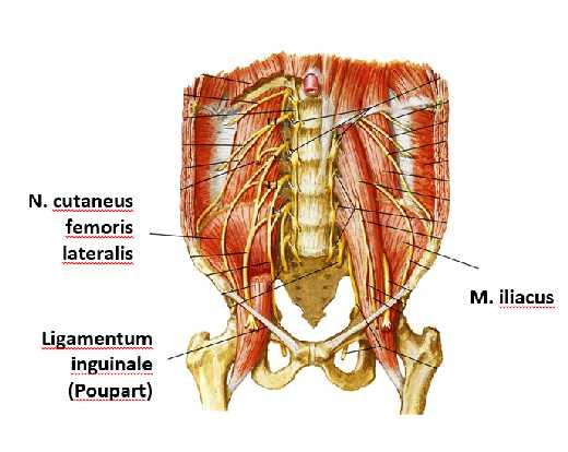 Dr. Diag - Iliacus alagút-szindróma