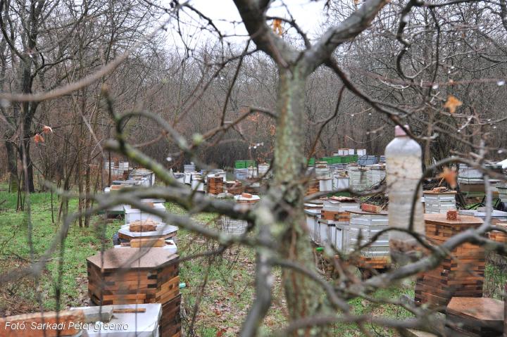bio méhészet babatpuszta.jpg