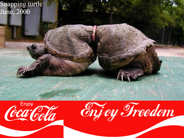 http://m.cdn.blog.hu/gr/greenr/image/cola-turtle.jpg