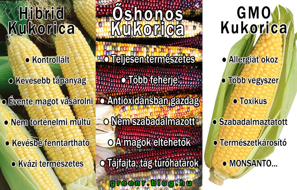 http://m.cdn.blog.hu/gr/greenr/image/hibrid_gmo_%C5%91shonos_kukorica.jpg