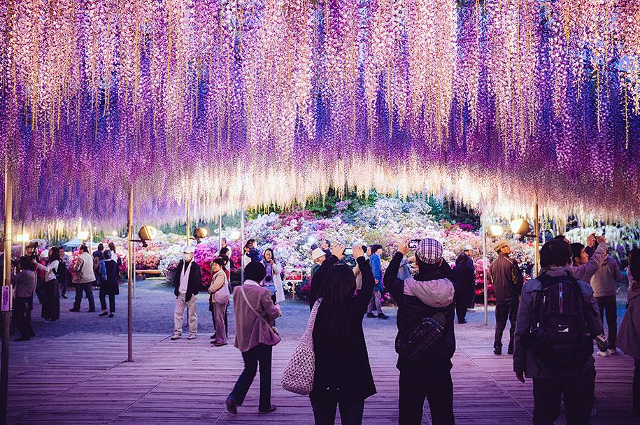 large-old-wisteria-bloom-japan-6.jpg