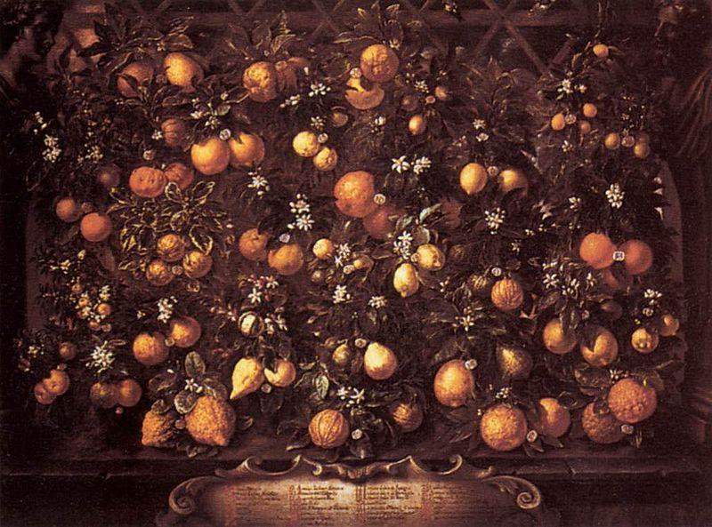 Bartolomeo_Bimbi_-_Citrus.jpg