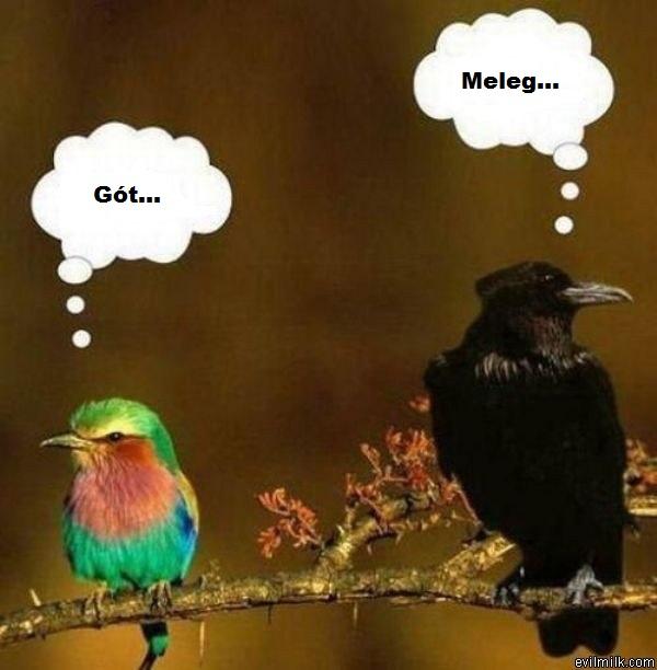 goth_and_gay_birds.jpg