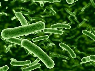 intestinal-bacteria.jpg