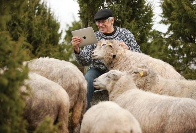 Észtország, pásztor iPaddel.jpg