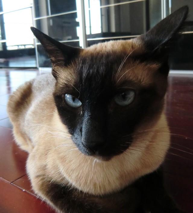 Felipe, a macska.jpg