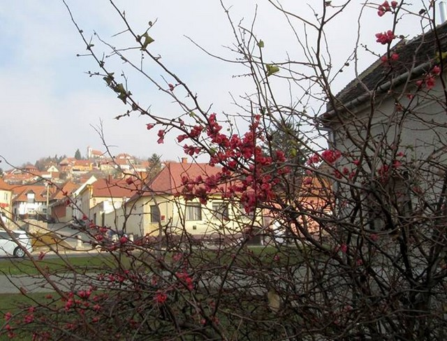 Magyarország, Pécs.jpg