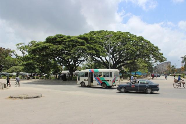 Majomkenyérfa és forgalom.jpg