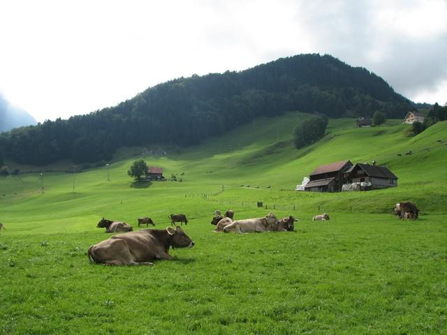 Winterthur rét.jpg