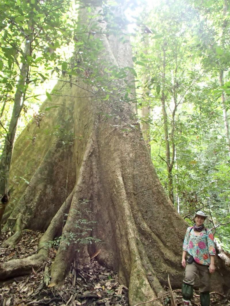 egy átlagos fa a dzsungelben.JPG