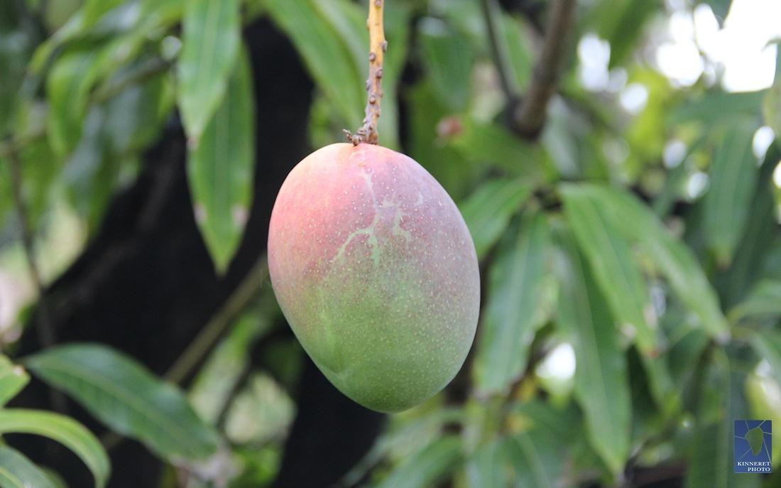 gyümölcs 2.jpg