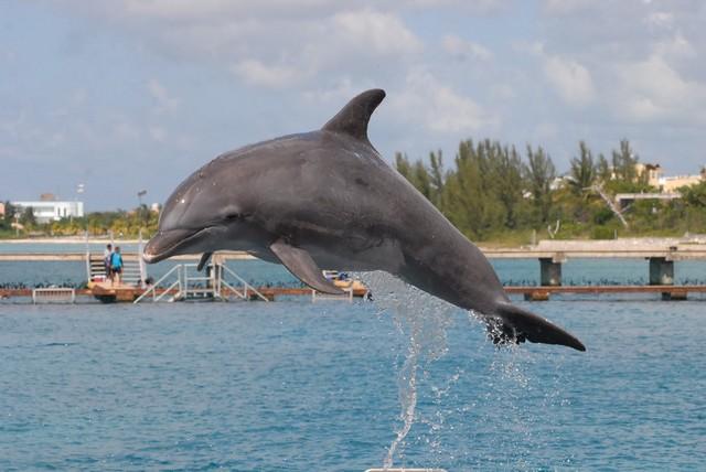 regina a delfin.JPG