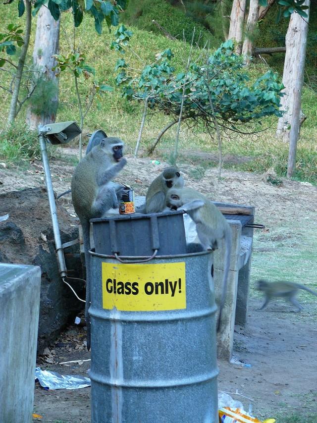 szemetes majmokkal.jpg