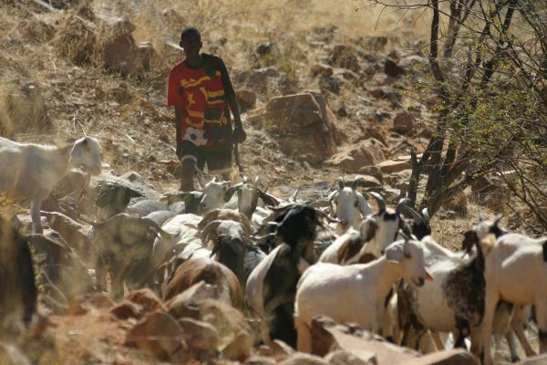 HimbaKecskepásztorKicsi.jpg
