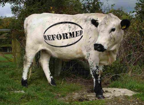 cap-reform-cow.jpg