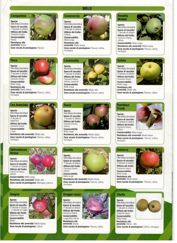 hagyományos almafajták