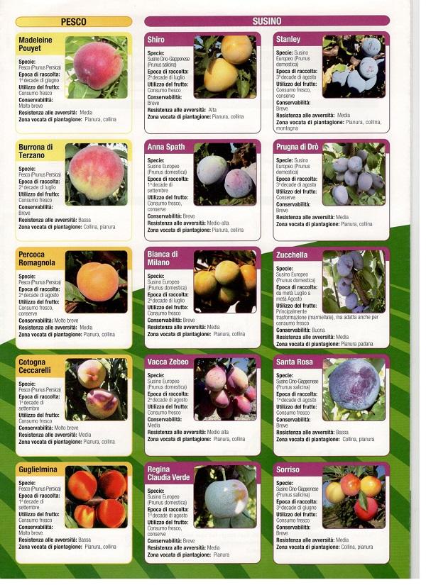 őszibarack és szilvafajták