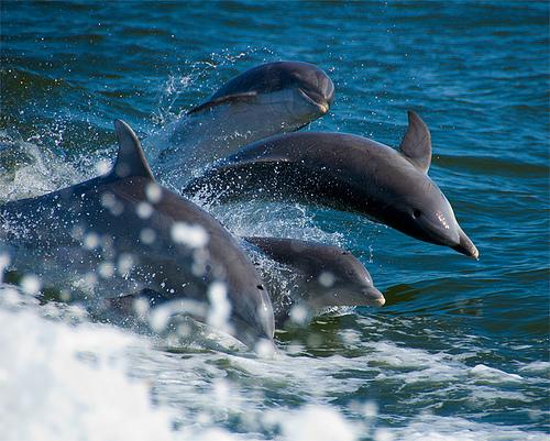 delfin csapat.jpg