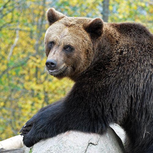 HSZ-medve-4.jpg