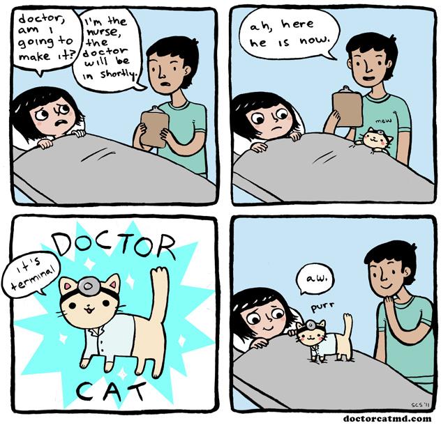 doctor-cat.jpg