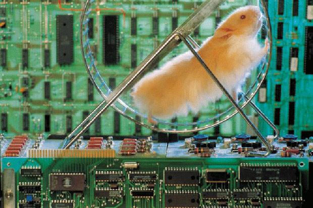 hamster-electricity.jpg