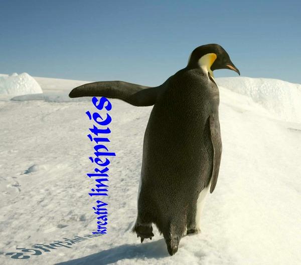 google-pingvin.jpg