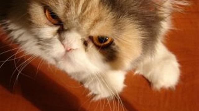 agressziv-cica.jpg