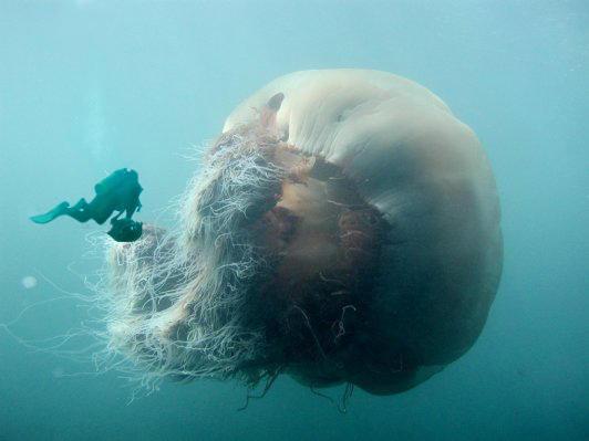 jellyfish_big.jpg