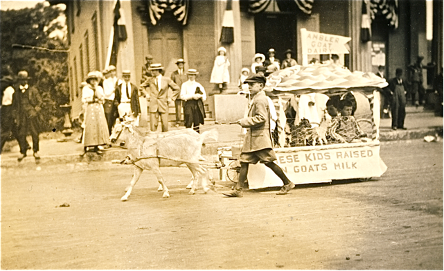 200th-parade-goat-cart.png