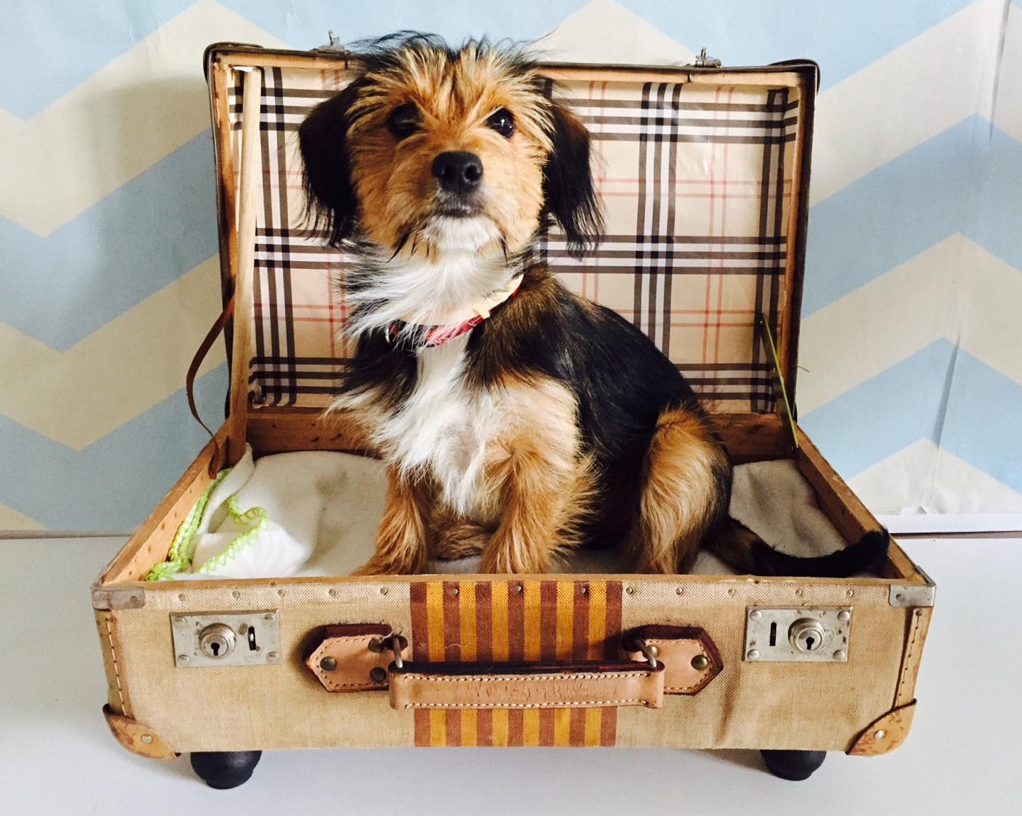Kutyaágy régi bőröndből - DIY leírással