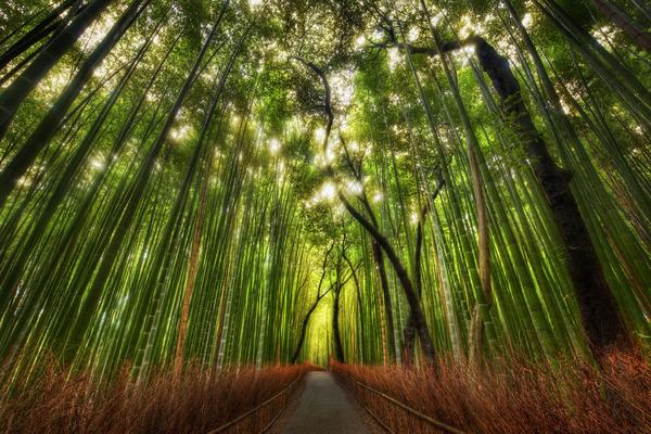bambusz_erdo.jpg