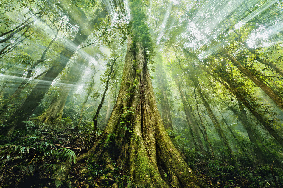 dzsungel.jpg