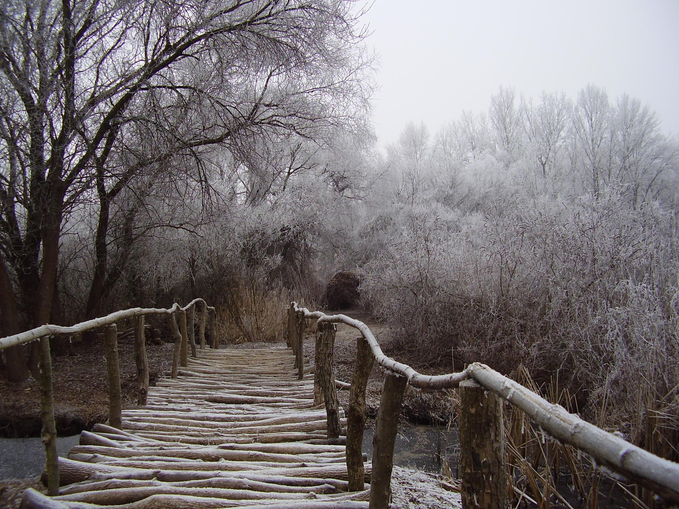Tiszavirág Ártéri Sétaút_télen.jpg