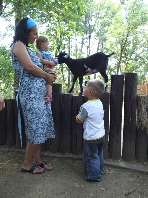 Pécs_Pécsi-Állatkert-és-Akvárium-Terrárium_Látnivalók_Horváth-Gábor_gyerekek-az-állatkertben_a.JPG