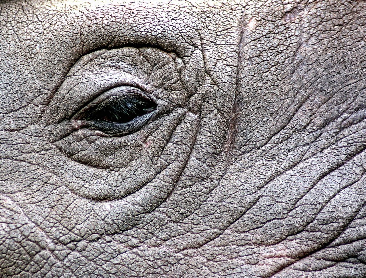 rhinoceros-448949_1280.jpg