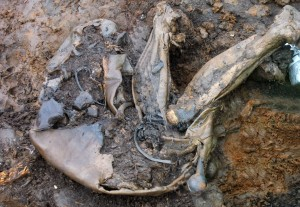 Bones-300x207.jpg