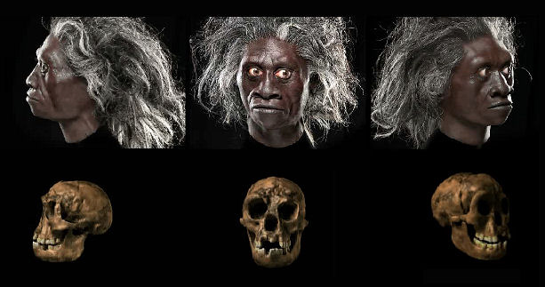 H-floresiensis.jpeg