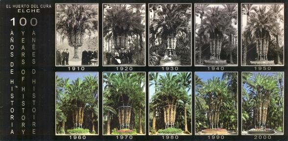 A császár pálma évszázada képeslapon.jpg