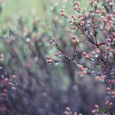 esős tavasz.jpg