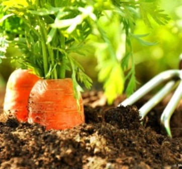 saeen-pflanzen-mondphase-280x260.jpg