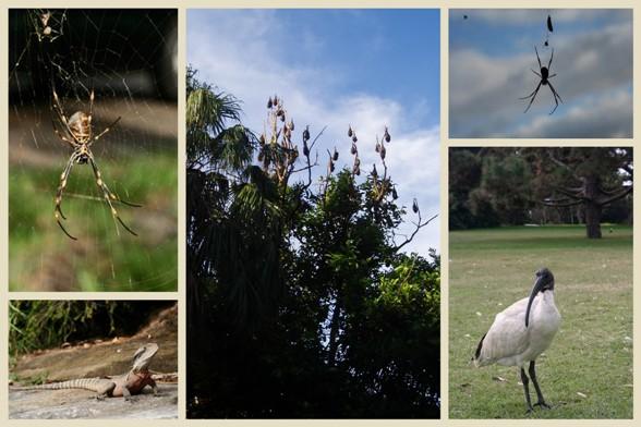 Sydney Botanic Garden3 másolata.jpg
